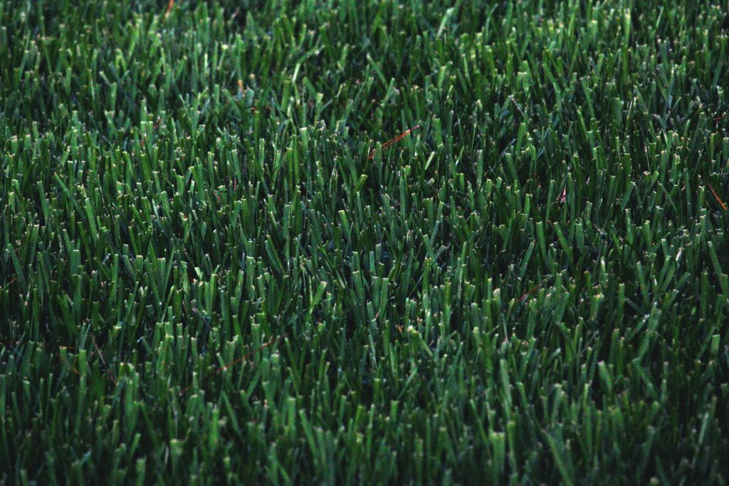 Green grass without using lawn aeration